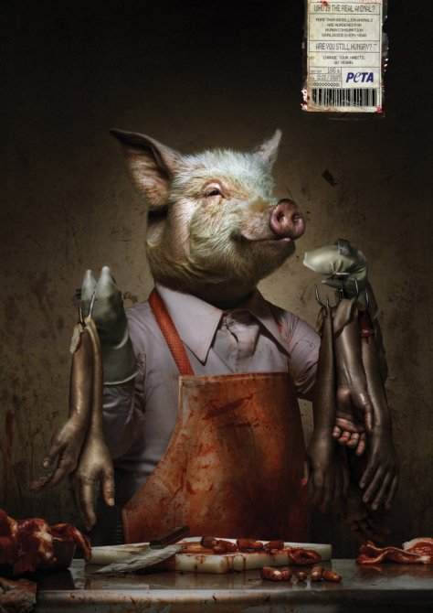 porc-peta-800x1131